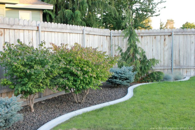 backyard-cheap-gardening-blissfully-ever-after-patio-makeover-on-a-budget-1600x1067-in-602