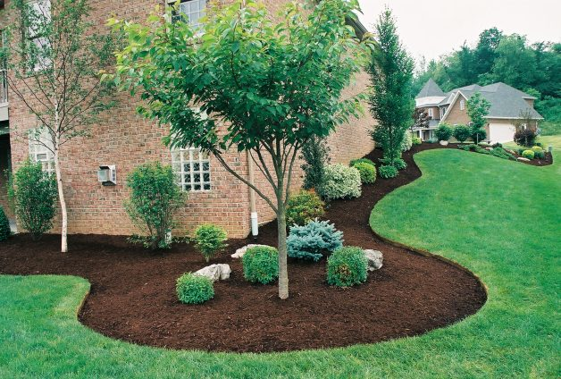landscaping-with-trees-12